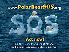 Polar Bear SOS